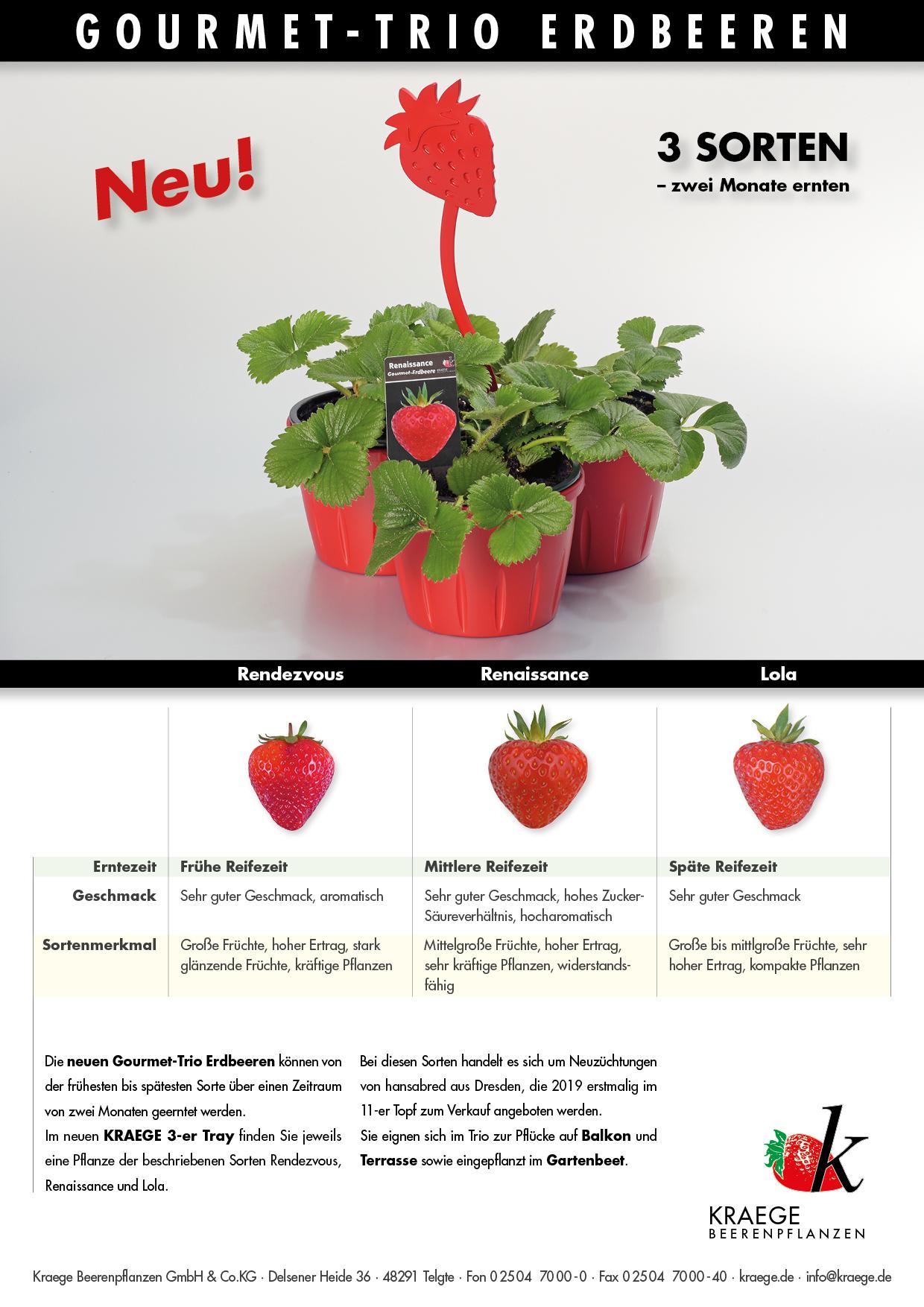 Erdbeerpflanzen Für Den Erwerbsgartenbau Kraege Beerenpflanzen